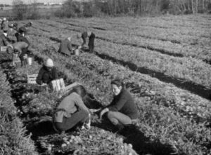 students_picking_agriculture